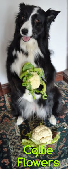 """Picked these Collie Flowers especially for you..."" Love Asha the border collie xxx"