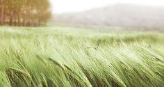 grass-wind-field-summer--color inspiration
