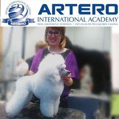 ALICANTE, (Villena). Profesora: Peluquera Canina desde 2003, compaginando este trabajo con el de adiestradora y especialista en modificación del comportamiento canino. En 2007 se forma en la especialidad de peluquería canina. En 2013, tras 10 años de experiencia profesional, decide abrir su propia peluquería en la que desarrolla todo tipo de técnicas de peluquería en todo tipo de razas. En 2014 se une al grupo de academias de Artero como http://arteroacademy.com/