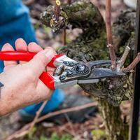 Vitis Vinifera, Pruning Shears, Grape Vines, Outdoor Gardens, Garden Tools, Adidas, Sad, Gardening, Deco