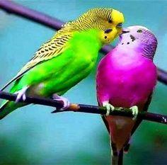 Kisses please!
