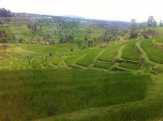 Jatiluwih Terraced Rice Fields, UNESCO Heritage Site. Bali, Indonesia.