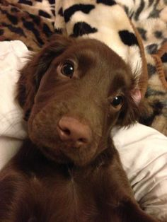 Cute Baby Dogs, Cute Dogs And Puppies, Cute Babies, Doggies, Cute Little Animals, Cute Funny Animals, Cute Animal Photos, Animal Pictures, Dog Pictures