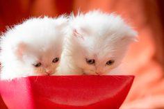 Kittens bowled by Sreekumar Krishnan on 500px