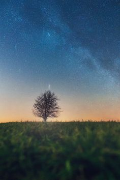 bare tree on grass field For this shot I went outside during a pretty cold night. Landscape Wallpaper, Nature Wallpaper, Wallpaper Backgrounds, Tree Wallpaper Iphone, Night Sky Wallpaper, Wallpaper For Your Phone, Galaxy Wallpaper, Cool Wallpaper, Mobile Wallpaper