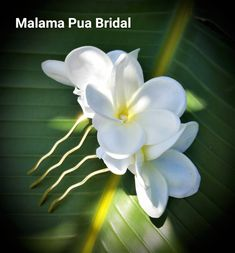 Hawaiian flower Hair comb, Bridal Hairpiece, floral hair accessory, Tropical real touch Plumeria, Beach, hair flower, fascinator, hair clip by MalamaPuaBridal on Etsy