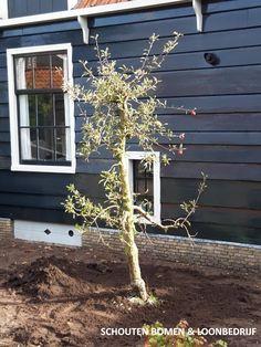 Oude Elstar appelboom (oude fruitboom) uit het assortiment van Schouten Bomen en Loonbedrijf Ladder Decor, Garden Ideas, Home Decor, Decoration Home, Room Decor, Landscaping Ideas, Backyard Ideas, Home Interior Design, Home Decoration