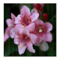 Pink Flower Macro Shower Curtain > Pink Flower Macro > Rosemariesw Design Photo Gifts