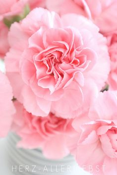 Carnation. Mary's love of God.  These flowers are said to have grown at Christ Nativity according to German legend