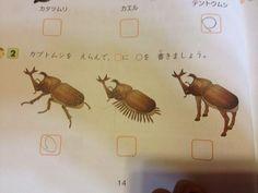 japanese school textbook :p Japanese Memes, Japanese Funny, Japanese School, Funny Laugh, Haha Funny, Hilarious, Awkward Family Photos, A Bug's Life, Very Funny