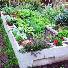 Um canteiro para a horta com blocos de concreto. Poderia ter mais uma linha de blocos.