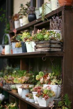 Tiny Gardens!
