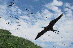 Isla de Aves. Tumbes