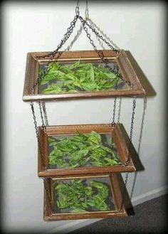 Picture frame shelfs for drying herbs etc.