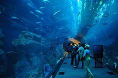 Descubre el  exotismo en los mejores hoteles baratos de Dubái, Emiratos Árabes Unidos