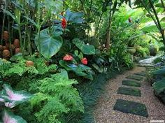 Image result for gardening with sub tropical potted plants