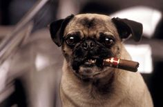 photos of dogs in men in black - Google Search