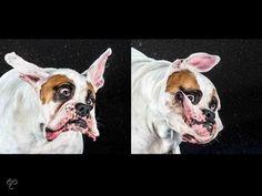 Funny Dogs - Shake, Carli Davidson