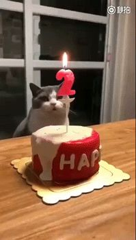 Since my cat today is the birthday