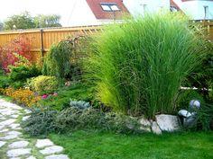 VĚKOŠE 2006 - rekonstrukce zahrady | DENIVKOVÁ ZAHRADA s.r.o. Zen, Fairy Gardens, Garden Ideas, Plants, Gardening, Lawn And Garden, Landscaping Ideas, Plant, Backyard Ideas