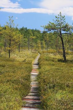 The Saco Heath - Maine. This is one of my favorite places...so peaceful!