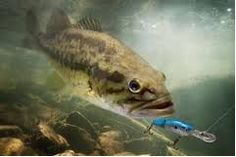 Largemouth Bass Fishing Tips and Techniques - http://bassfishingmaniacs.com/largemouth-bass-fishing-tips-and-techniques/