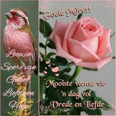 Lekker Dag, Goeie More, Afrikaans Quotes, Christian Messages, Special Quotes, Good Morning Quotes, Lilac, Flora, Fancy