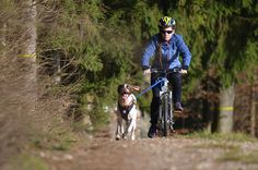 Bikejöring with pointer :) #SportDog , #Bikejöring , #Pointer , #EnglishPointer , #BikejöringPointer , #LiverWhitePointer , #MorganThePointer