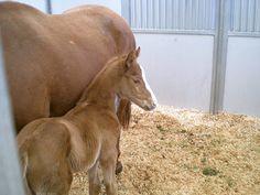 California Chrome when a foal