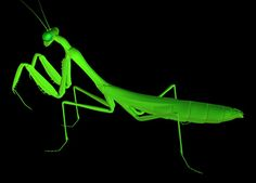 praying mantis 3d 3ds