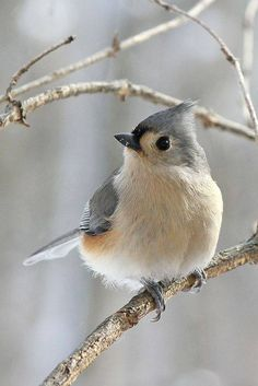 So cute! #bird
