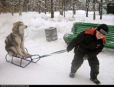 Get A Dog They Said...lol
