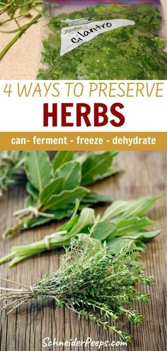 Many herbs such as oregano and rosemary do very well when they're dried. However, some herbs such as cilantro and basil loose their flavor when dried, so it's better to freeze them. Learn how to dry, freeze, can, and ferment herbs at home in this ultimate guide to preserving herbs. #healingherbs #Simpleliving #growingfood #homesteading Herbal Magic, Herbal Oil, Herbs For Health, Plant Identification, Preserve Herbs, Herbs Indoors, Wild Edibles, Healing Herbs, Grow Your Own Food