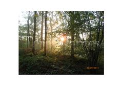 Early Morning Forest Mist no. 2 by TeresaJames on Etsy