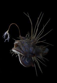 Hairy Angler - - fish - Home Beautiful Sea Creatures, Deep Sea Creatures, Weird Creatures, Animals Beautiful, Underwater Creatures, Underwater Life, Deep Sea Animals, Fauna Marina, Weird Fish