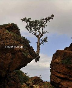 Nature Always Finds It's Way - Never Give Up ! Amazing Pictures – Virtual University of Pakistan Dame Nature, Living On The Edge, Nature Tree, Flowers Nature, Tree Forest, Belleza Natural, Amazing Nature, It's Amazing, Belle Photo