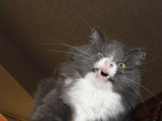 cats about to sneeze - Imgur { Follow the link because there is 20 photos. SO FUNNY! }