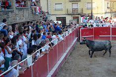 Santacara: Vacas de Adrián Domínguez (6) Wrestling, Cows, Lucha Libre