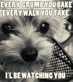 M.              cutiesnfuzzies/ every-crumb-you-bake-every-walk-you-take-ill