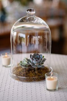 2014 Wedding Trends | Succulents | Succulent Centerpiece Inspiration |  Read more - http://www.stylemepretty.com/texas-weddings/2013/10/15/fredericksburg-wedding-from-caroline-plus-ben-photography/