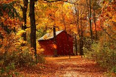 Forests: Farm Path Tree Forest Leaf Landscape Splendor Fall Cabin Autumn Season Cottage Colorful Nature Trees Beautiful October House Woods Peaceful Leaves Beauty Colors Photography Evergreen Wallpaper for HD High Definition Wide Autumn Day, Autumn Leaves, Autumn Forest, Tree Forest, Forest Cabin, Autumn Walks, Fall Trees, Forest House, Foto Gif