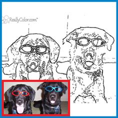This Dogs free coloring page was derived from a real world dog photo of some cool dogs.    Attribution: Bear & Avery by Pacdog, edited by ReallyColor (Own Work) [CC-BYSA-2.5] - http://www.flickr.com/photos/83404210@N00/64098298