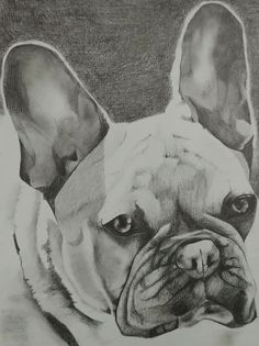 Took me awhile, but managed to finally finish this portrait of hugo in my spare time. It was nice to spice up my normal routine of drawing people and instead draw animals; especially this bundle of joy