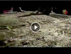 Documentary - Phoenician | Art Promotion Blog