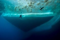 PHOTOGRAPH BY LAURENT BALLESTA / In the deepest dive ever beneath Antarctic ice, thriving plants and animals are captured on camera.