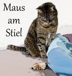 Das beste Katzenspielzeug ever!