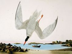"Common Tern, Monhegan Island, ME. Watercolor and gouache on paper, 30"" x 40"""