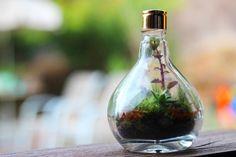 Mini-jardim em frasco de perfume da Haflora para Etc&Arts