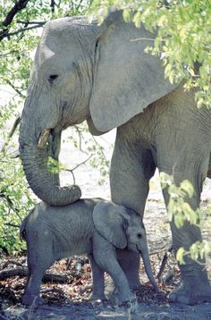 //Mummy and Baby Elephants, South Africa