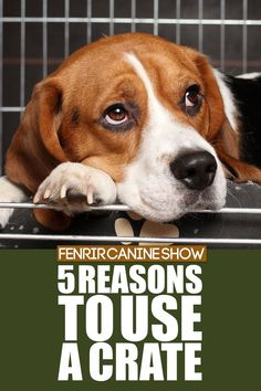 Never been sure about crate training your puppy or dog? Check out our video on 5 reasons to use a crate when training your dog. More awesome dog information at Fenrir Canine Show and Fenrir Canine Leaders. Large Dog Breeds, Large Dogs, Small Dogs, Dog Information, Getting A Puppy, Medium Sized Dogs, Crate Training, Training Your Puppy, Baby Dogs